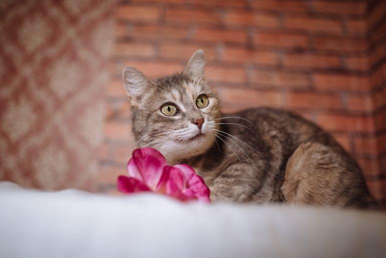 Кошки знают свои имена, просто иногда предпочитают это скрывать