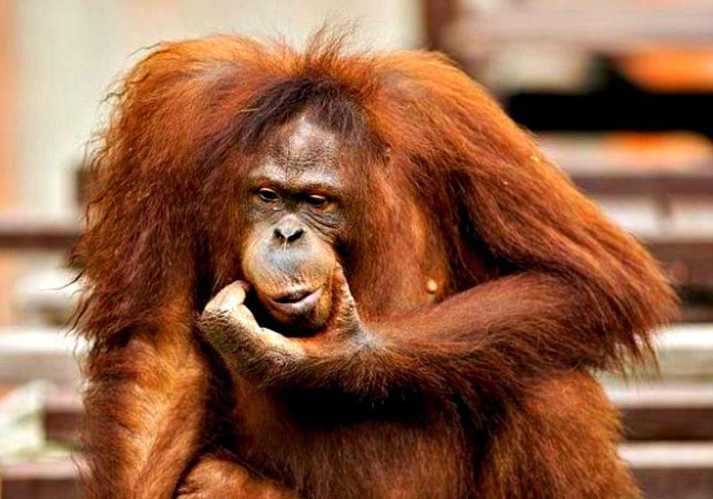 Самый умный: 10 животных, обладающих недюжинным интеллектом