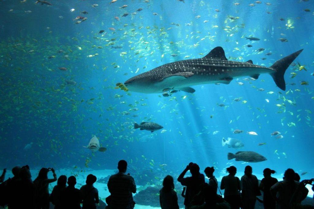 11 удивительнейших аквариумов на Земле