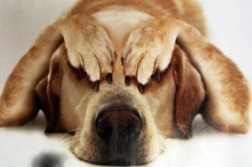 Собака прячется в доме: причины и когда стоит беспокоиться