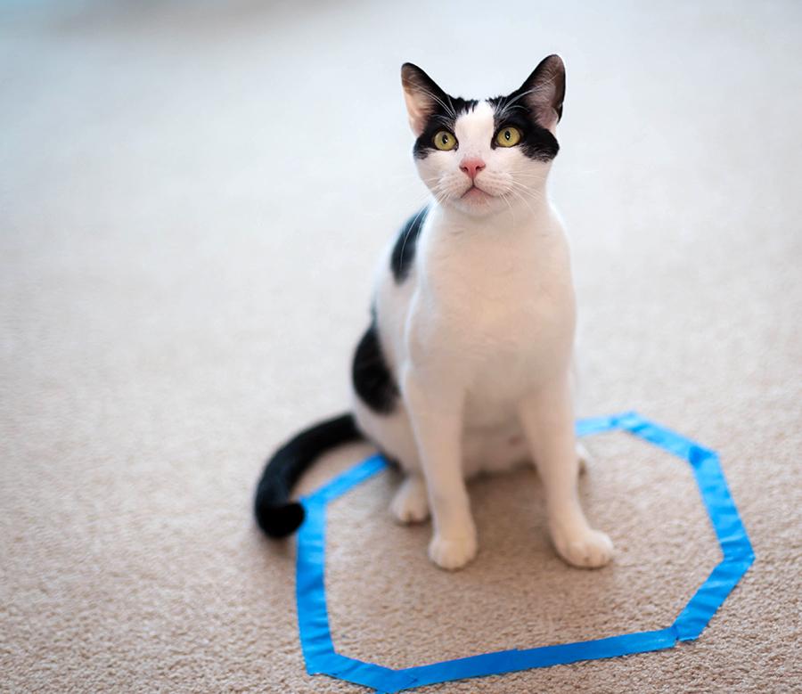 Почему кошку манит изображение круга или квадрата на полу?