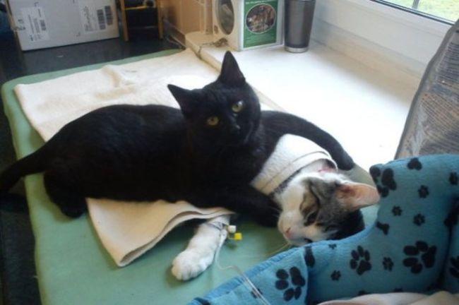 Кот работает медбратом в ветеринарной клинике