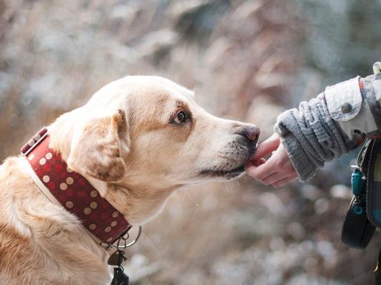 Чем пахнут для собак человеческие эмоции и болезни?