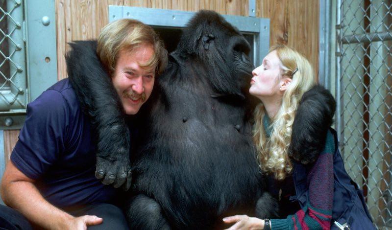 «Говорящая» горилла Коко