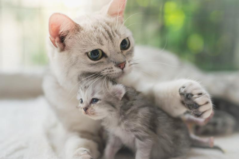 Коты и кошки. Вид один, а характеры разные
