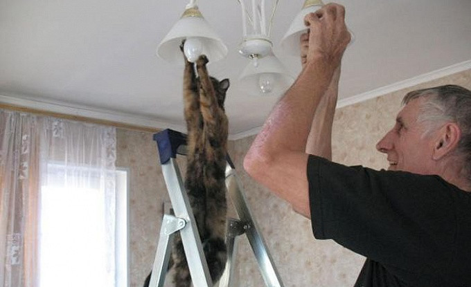 Животные, помогающие с домашними делами