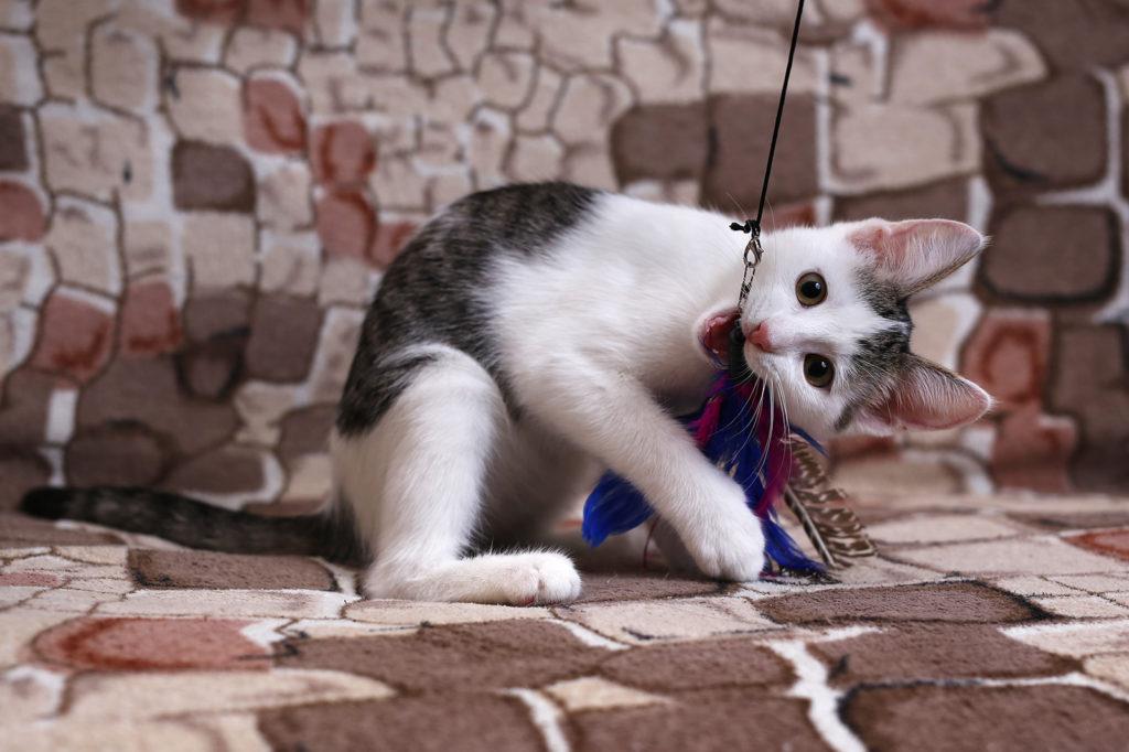 Не смогли пройти мимо бездомного котёнка. С чего начать дружбу с ним?