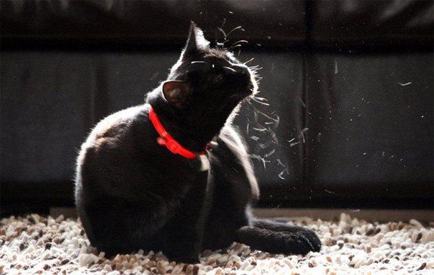 Что делать, если кот сильно линяет?