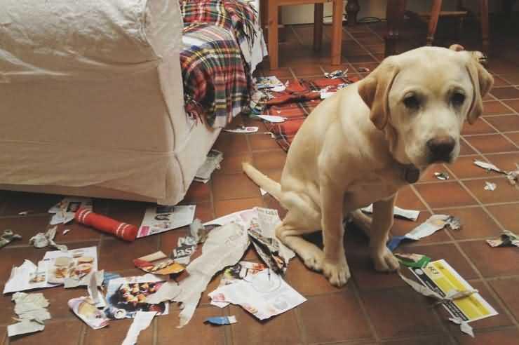 Как рационально использовать газету при воспитании щенка