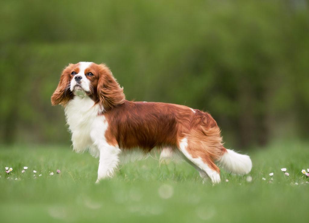 Собака в большом городе или 10 лучших пород для горожан