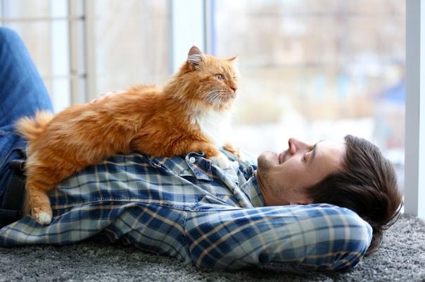 Почему кошки тянутся к тем, кто их не любит?