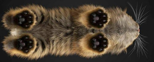 Как правильно ухаживать за подушечками лап у кошек