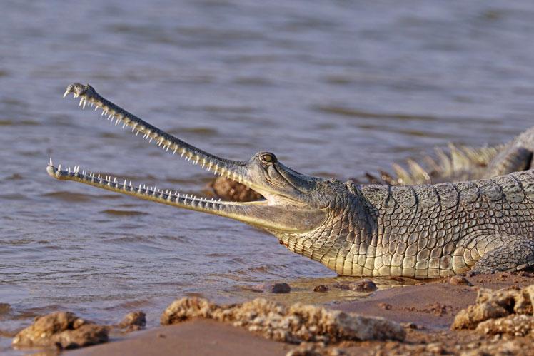 Самые безопасные животные с ужасающим внешним видом