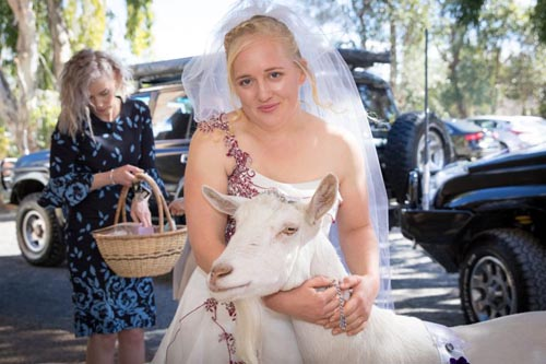 Домашняя коза сыграла важную роль на свадебной церемонии