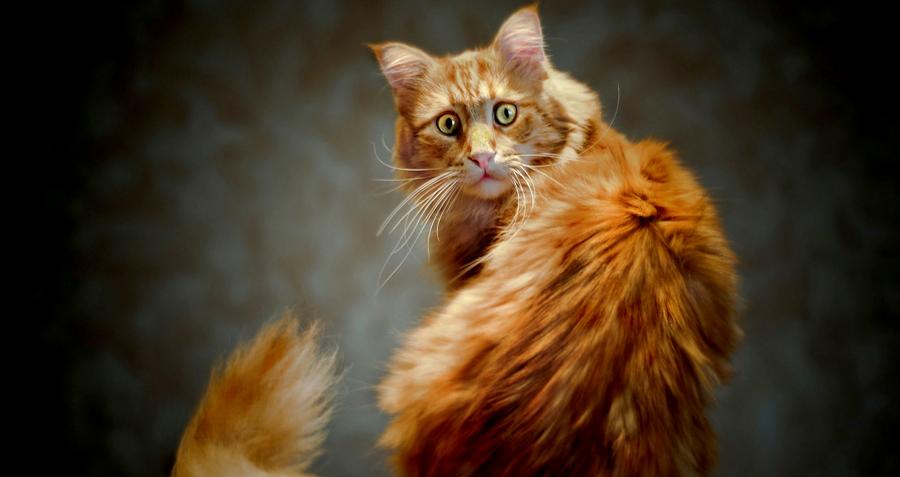 Познавательная информация о бровях и усах кошачьих