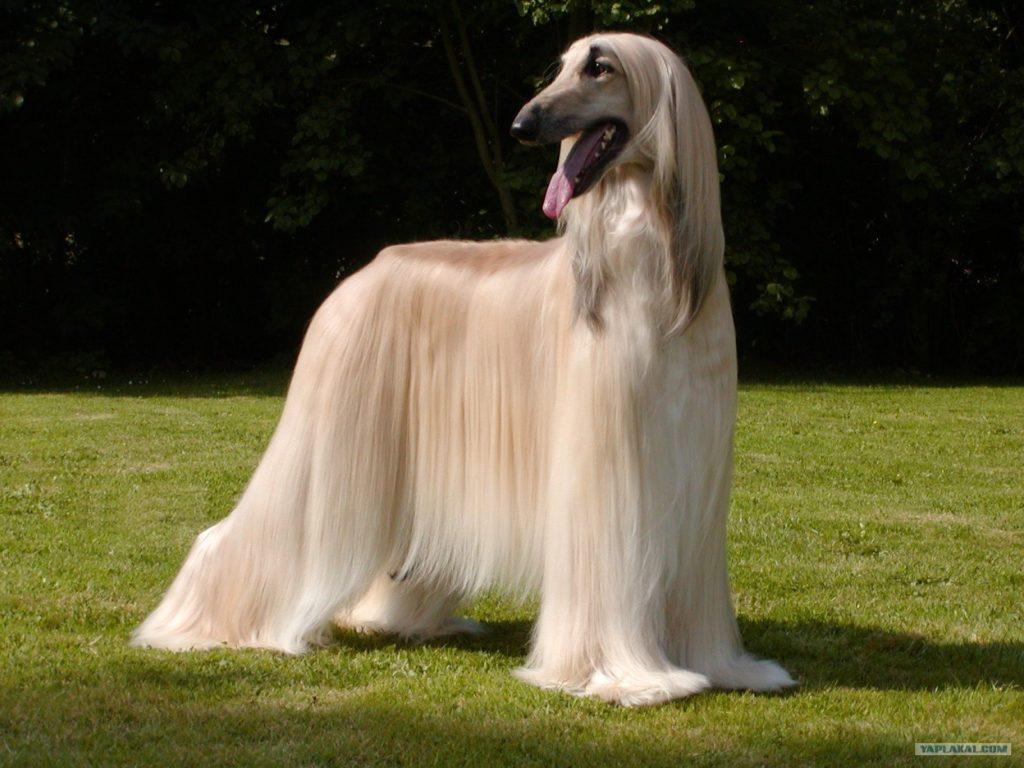 10 животных, которые обладают потрясающей шерстью