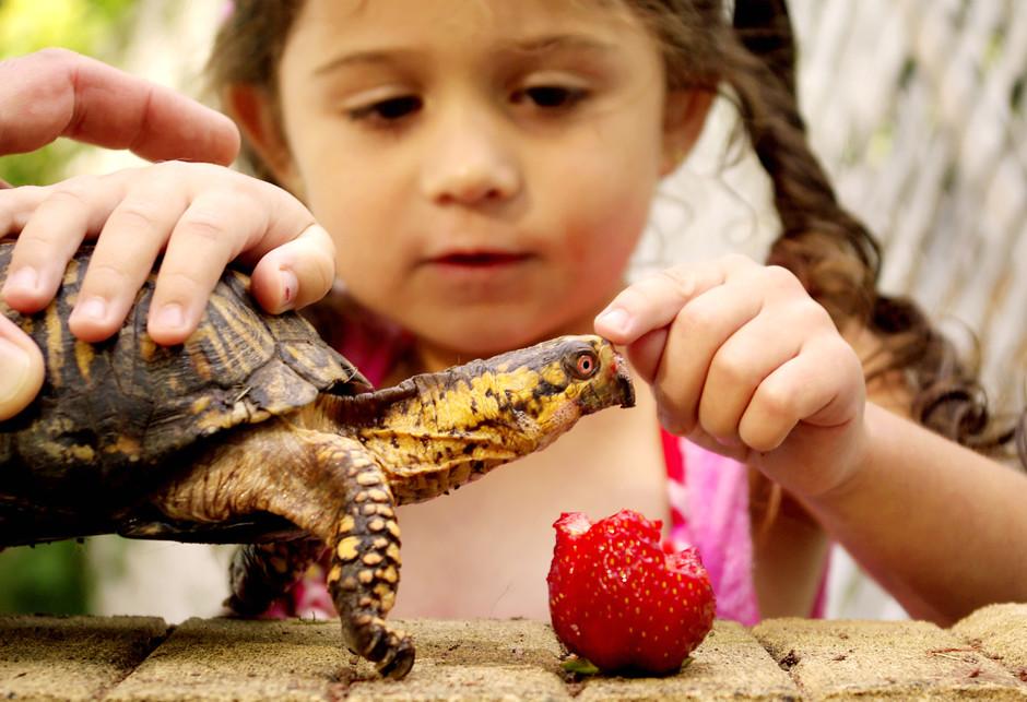 Какое домашнее животное лучше завести ребенку