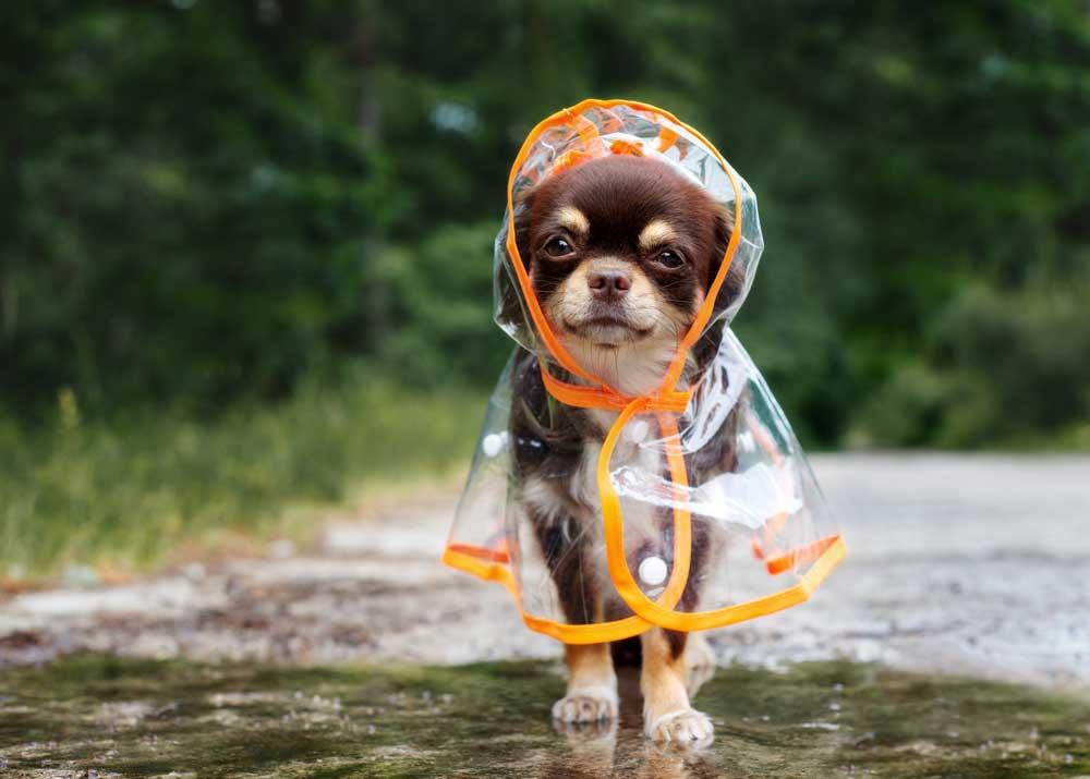 Одежда для собак: нужна ли она?