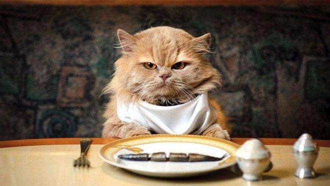 ТОП-5 симптомов кошачьей скуки