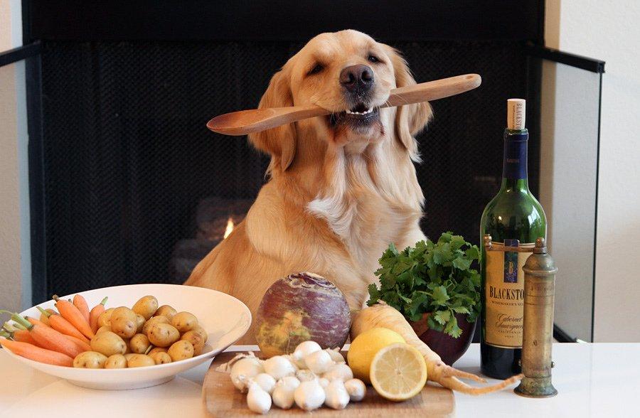 8 пород собак, которых очень легко раскормить