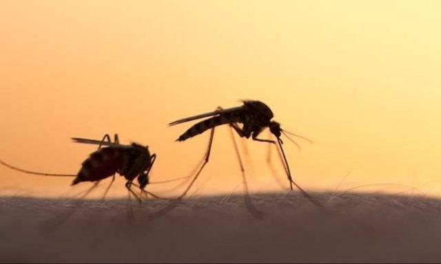 Музыка, отпугивающая комаров