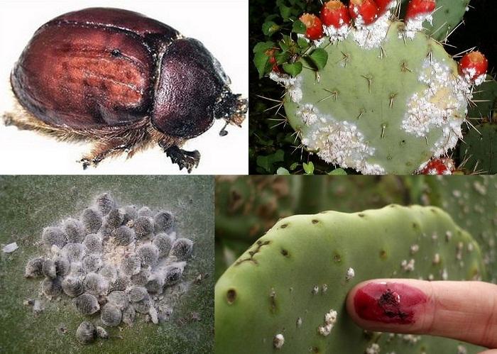 10 самых полезных насекомых, деятельность которых важна для всего человечества