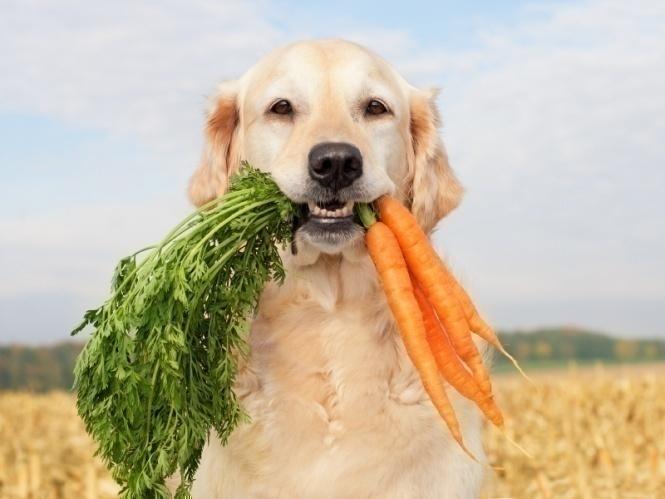 Действительно ли собакам нельзя есть эти продукты?