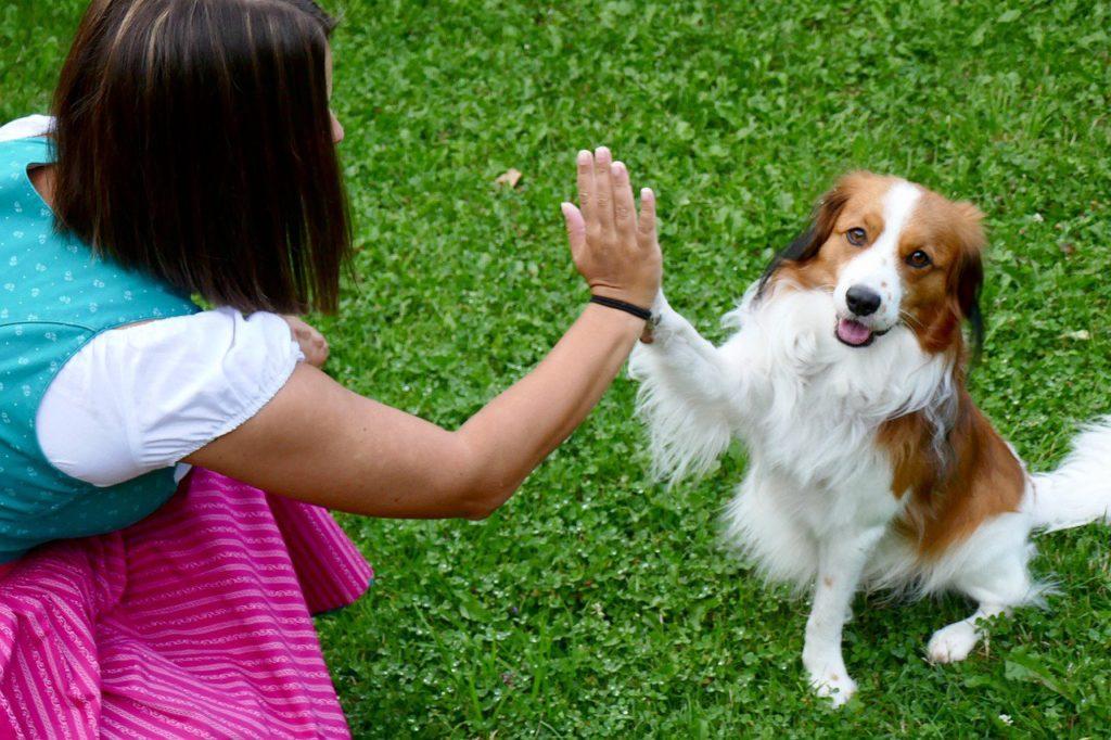 Самые невероятные, смешные и нелепые законы, касающиеся животных