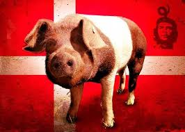 Протестная свинья: история появления, характеристика, охрана