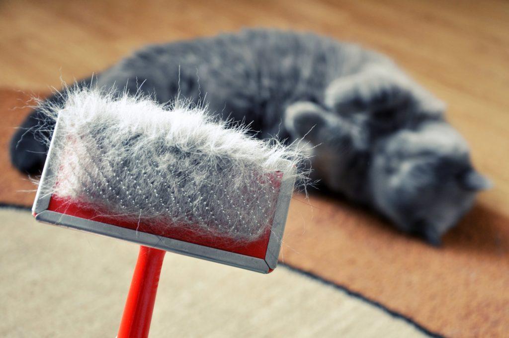 Причины, профилактика и лечение перхоти у кошек
