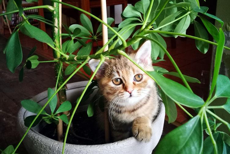 Что делать, если кошка есть цветы