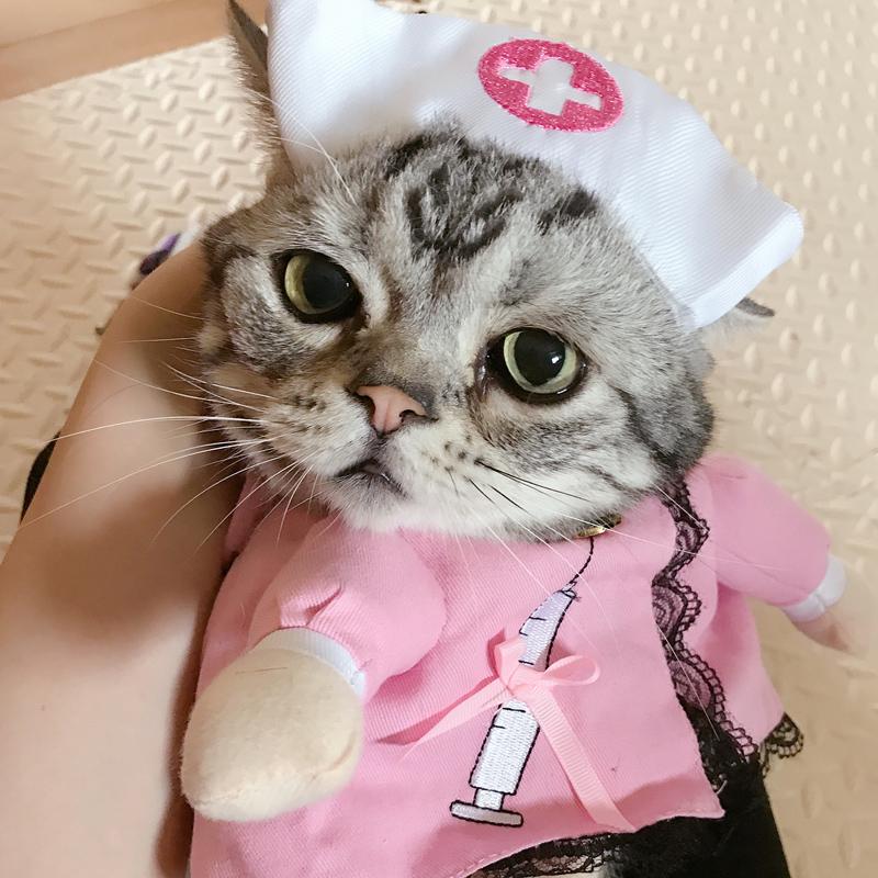 Повышенная температура у кошек: как измерить?