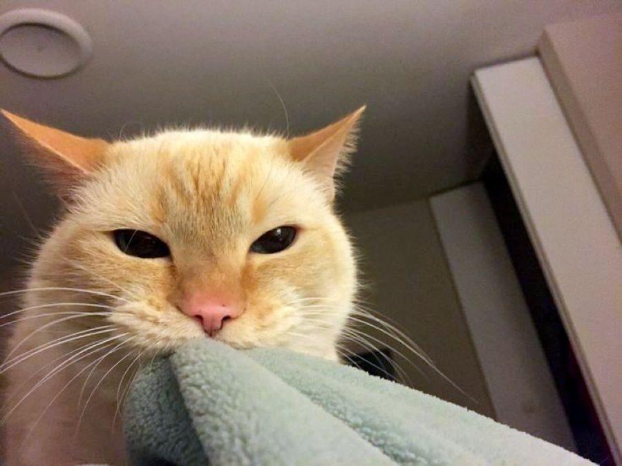 Кошка, дай поспать: как отучить животное будить хозяев рано утром?