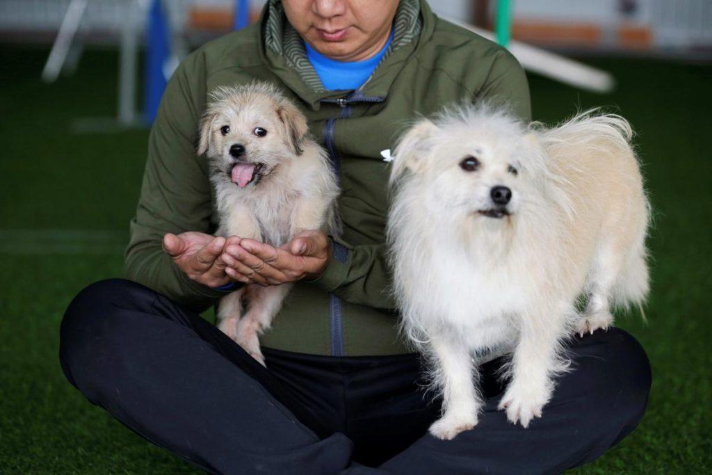 В Китае планируют массово клонировать домашних питомцев