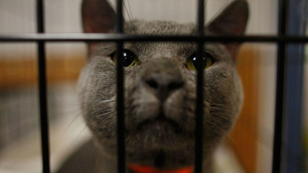 Запрет кошек в деревне Омауи