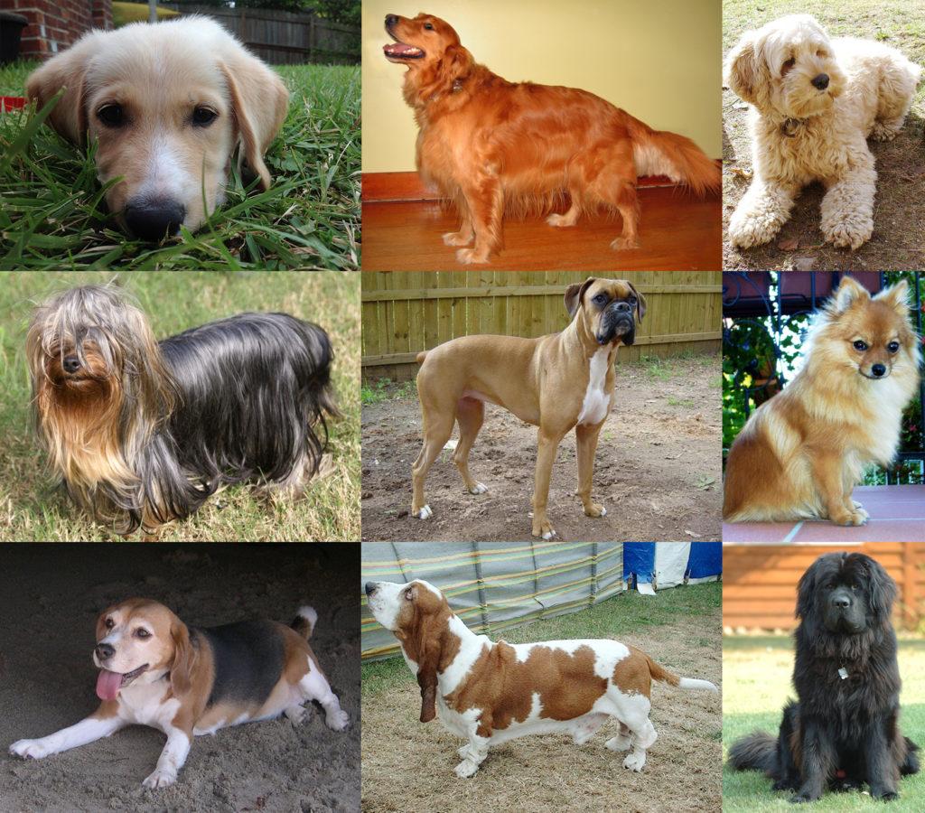 Откуда пошли первые европейские собаки?