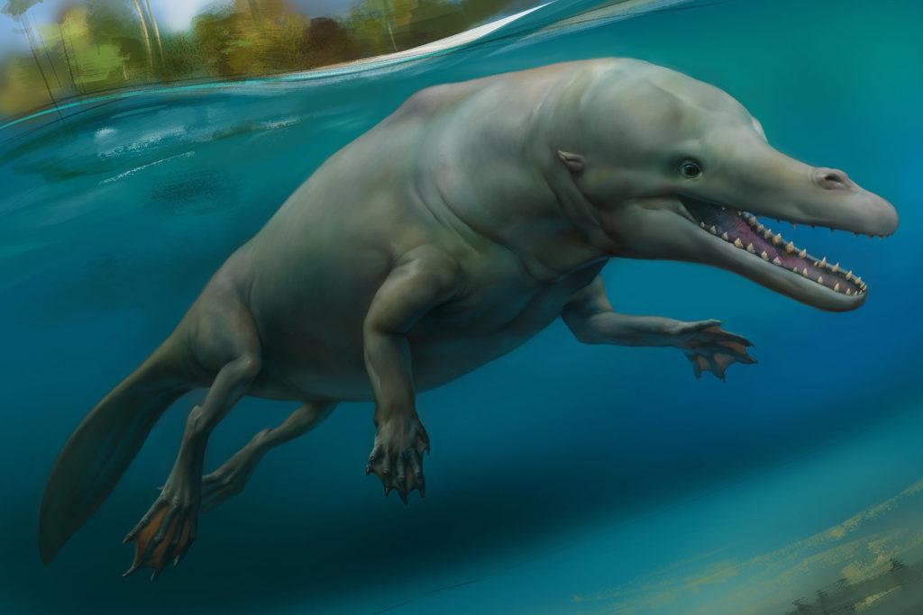 Древние киты: Жизнь на суше и в воде