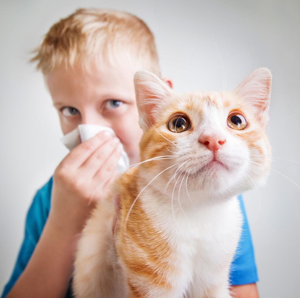Ученые нашли средство, избавляющее любителей кошек от аллергии