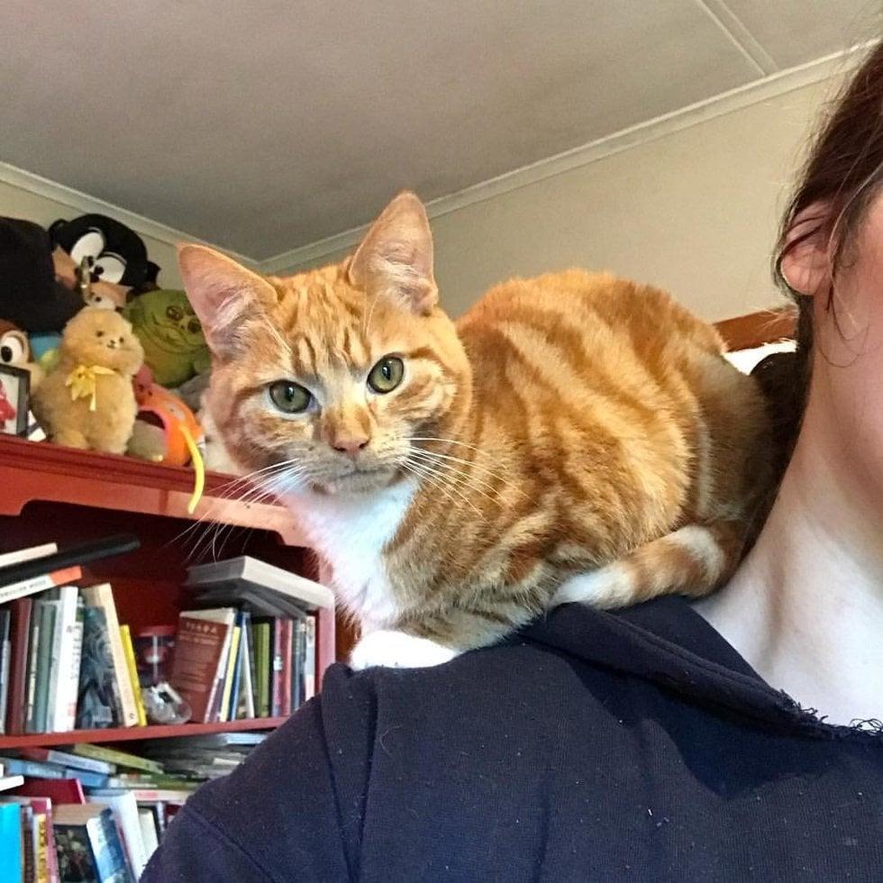 Котёнок-карлик из Новой Зеландии «живет» на плече у хозяйки.
