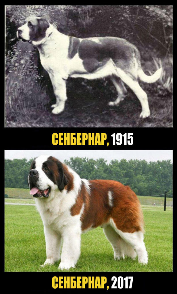 100 лет селекции. Какими были наши собаки