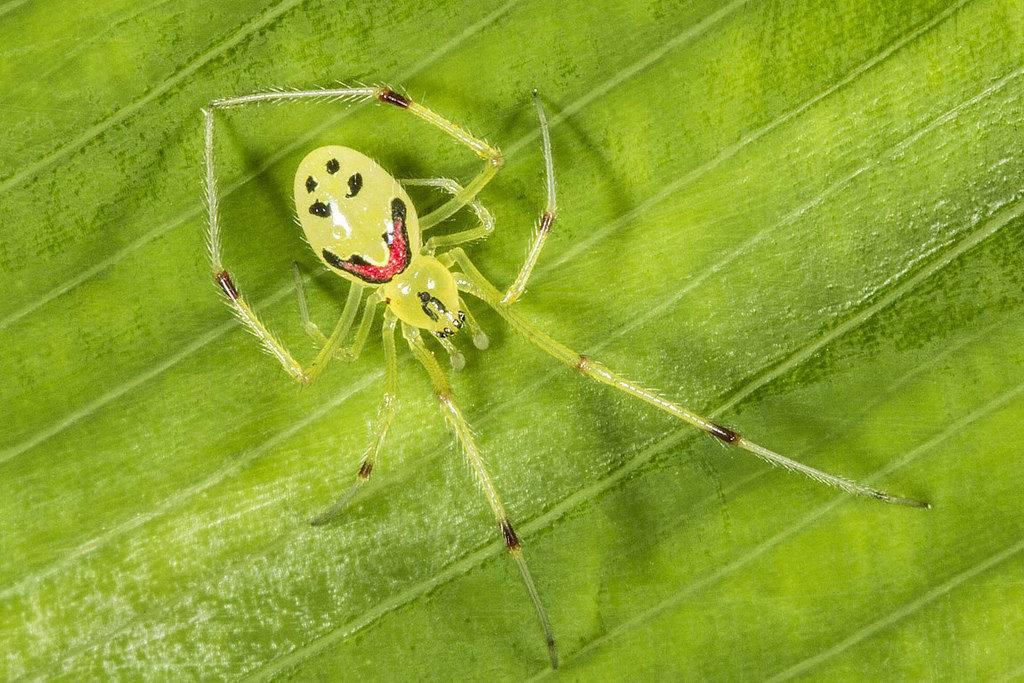 Знакомство с пауком, который рад тебя видеть