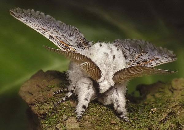 Большая гарпия - монстр в обычном лесу