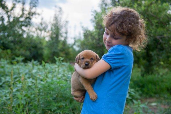 Распространенные фобии щенка и меры борьбы с ними