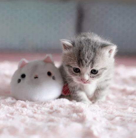 Почему кошка не принимает котят, и как с этим справиться