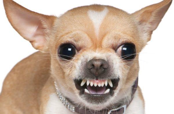 Способы устранения неправильного прикуса у щенков