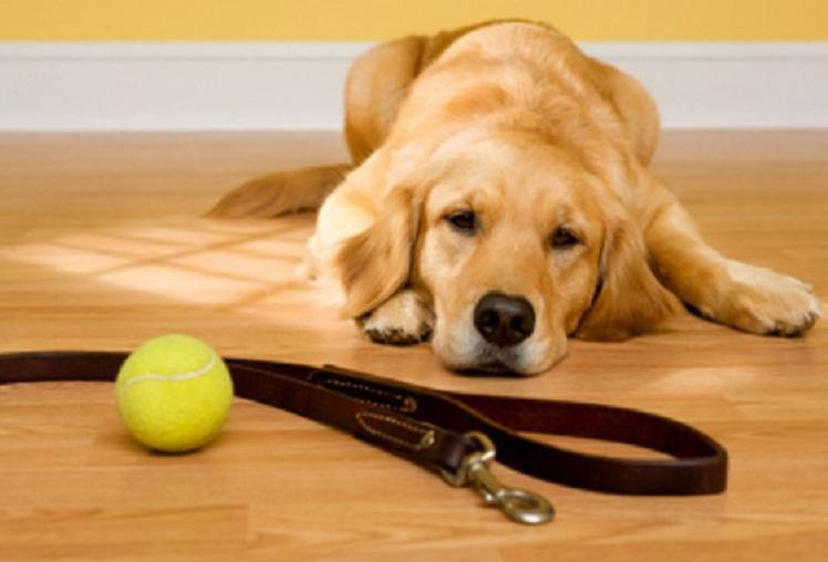 Домашний питомец: почему собака отказывается гулять