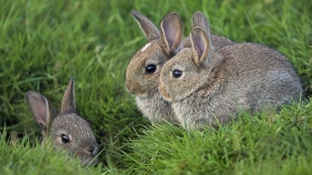 Собственный бизнес: разведение кроликов