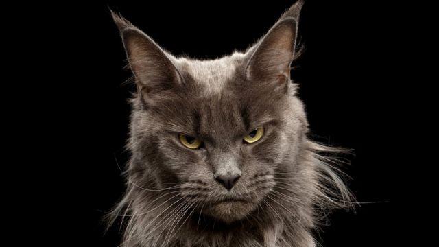 Почему стоит завести кошку: причины, озвученные учеными