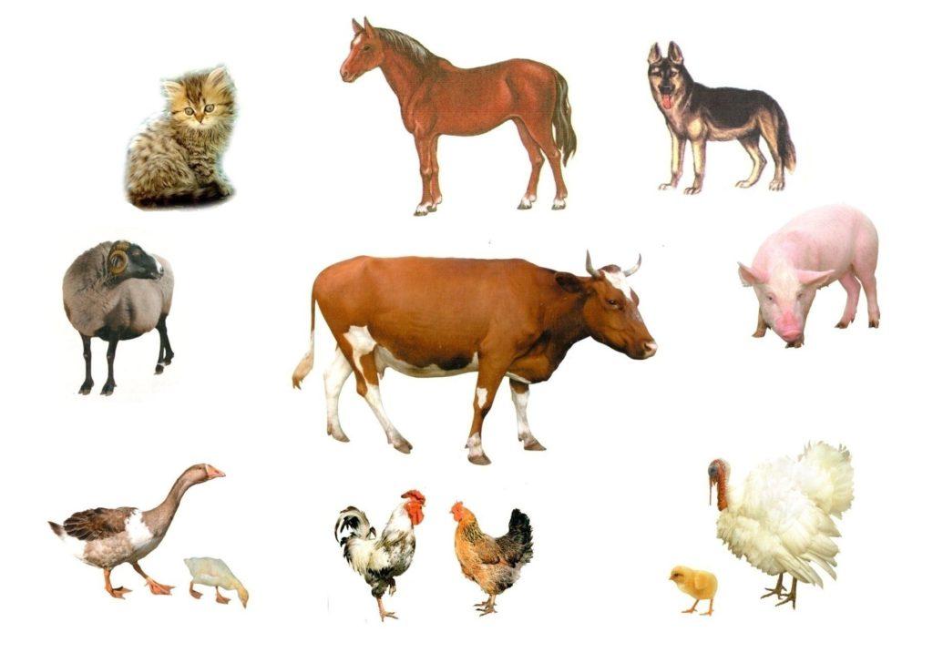 Что такое одомашнивание в животноводстве
